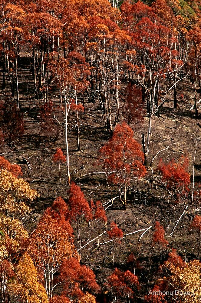 Autumn-Mt LLoyd by Anthony Davey