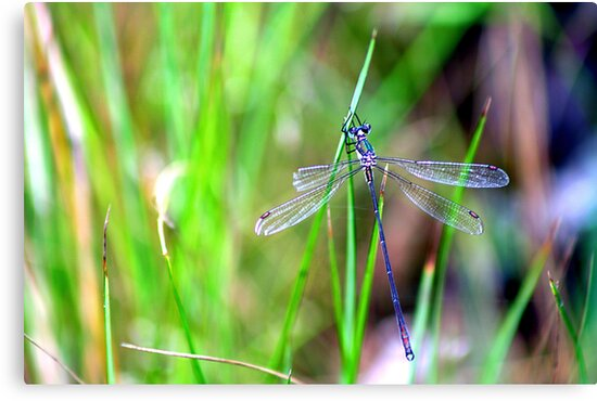 Dragonfly by Larry149