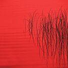 Reeds24 by Tom  Reynen