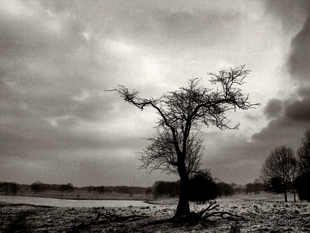 Outstretched Limbs by spottydog06