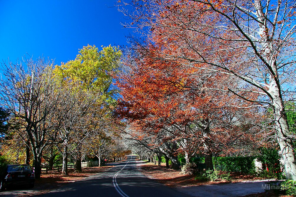 Autumn Colours Mt. Wilson by MiImages