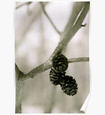 petite pinecones Poster
