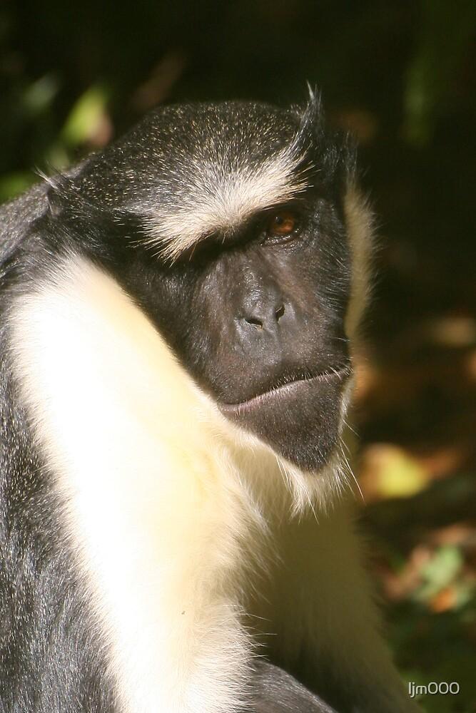 Diana monkey portrait by ljm000