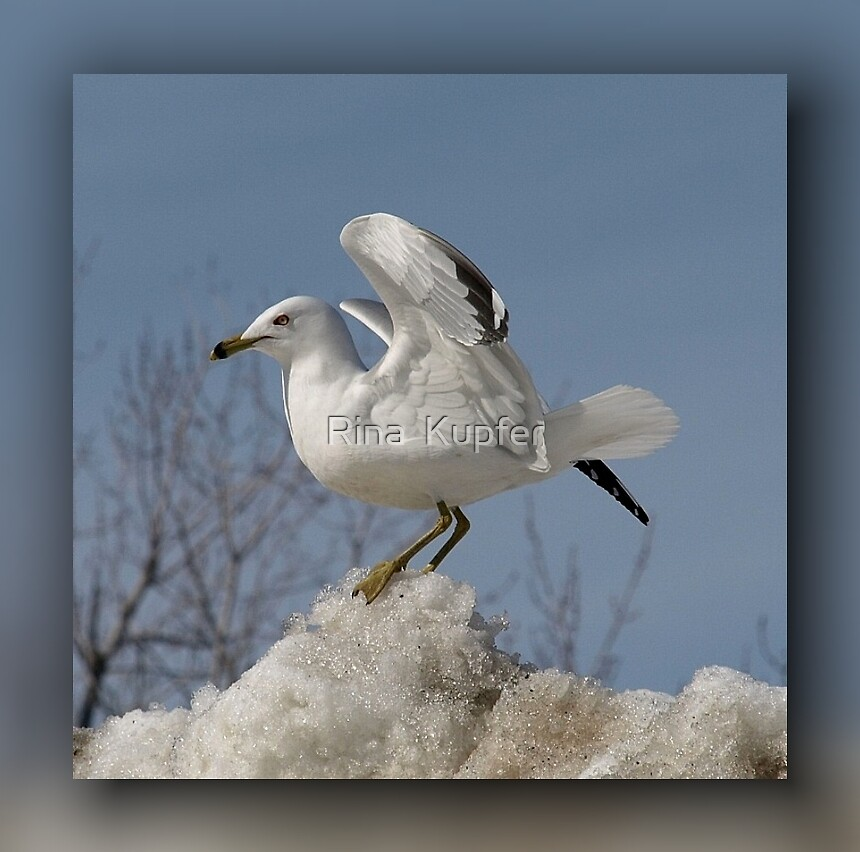 Winter Fly by Rina  Kupfer
