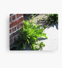 Growing from the Cracks Canvas Print