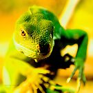 Iguana by cs-cookie