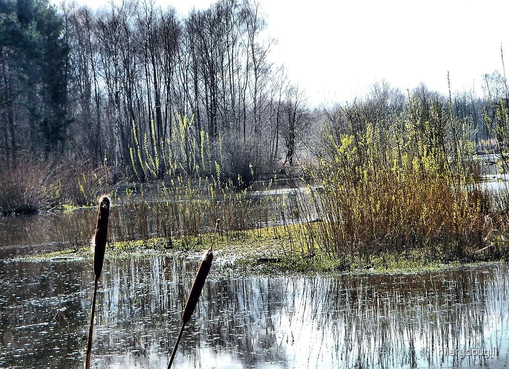 More wetlands by hilarydougill