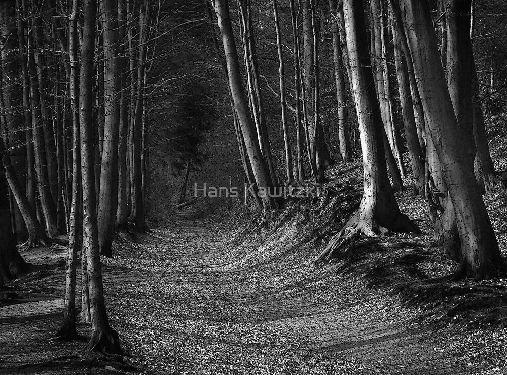 044 The Forest by Hans Kawitzki