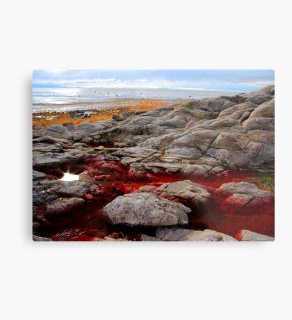 Red Algae Metal Print