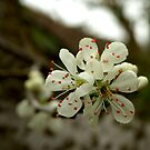 Spring Blossom by Mark Wilson