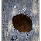 Log Head by Bean Strangeways