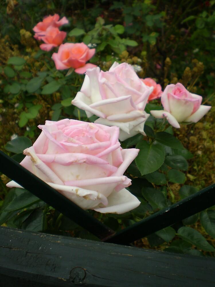 Rose Revolution by veevixen