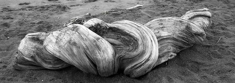 Driftwood 2 by Carrie Norberg