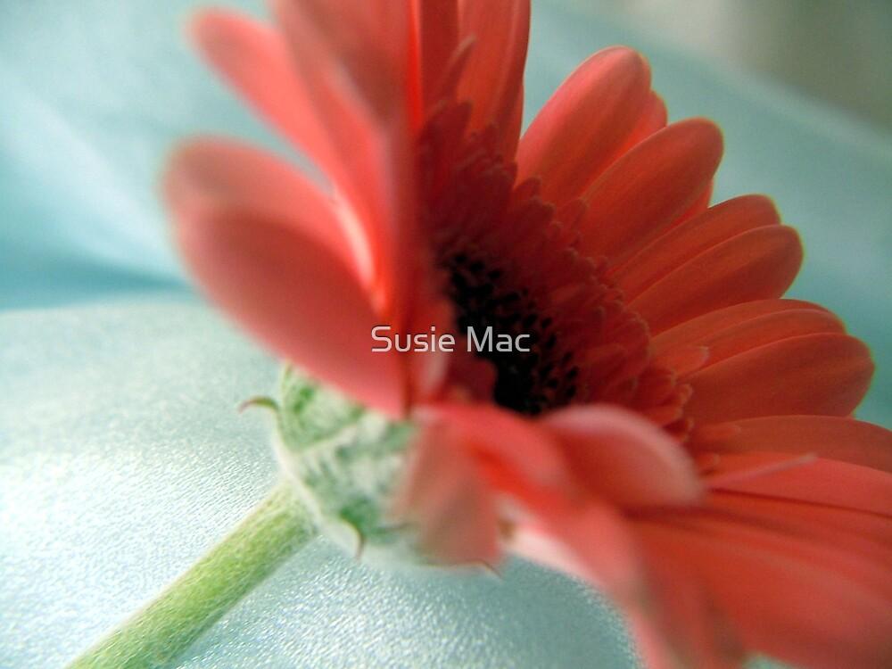 Pink petals by Susie Mac