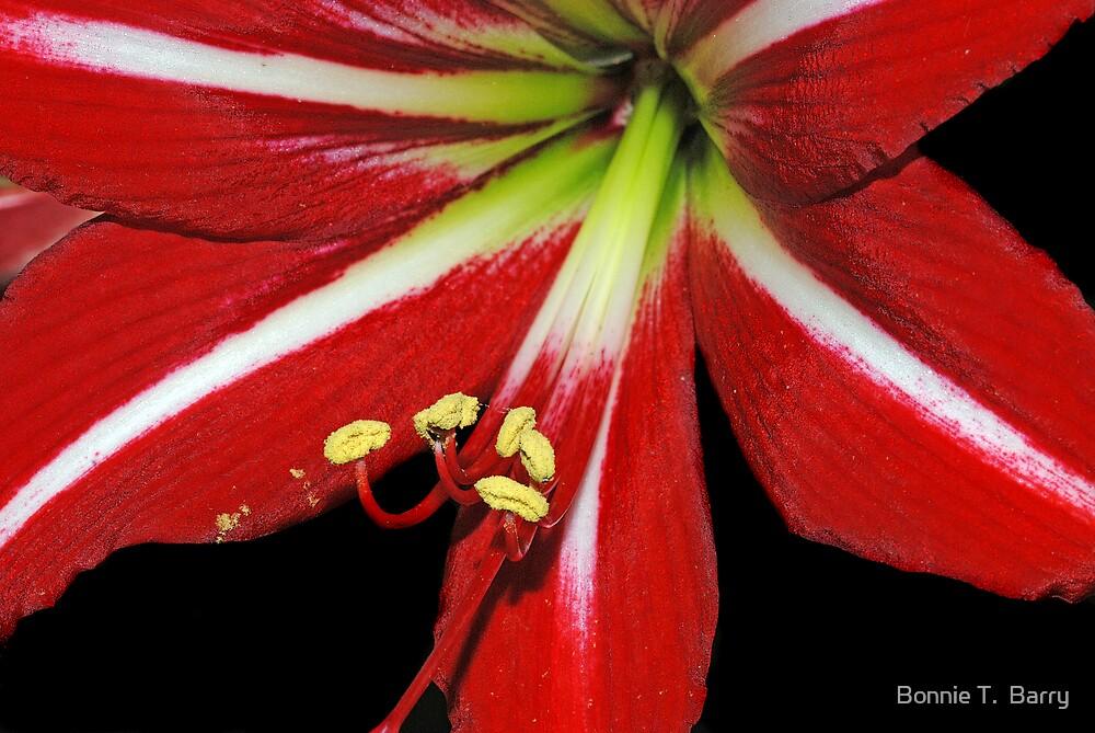 St. Joseph Lily by Bonnie T.  Barry