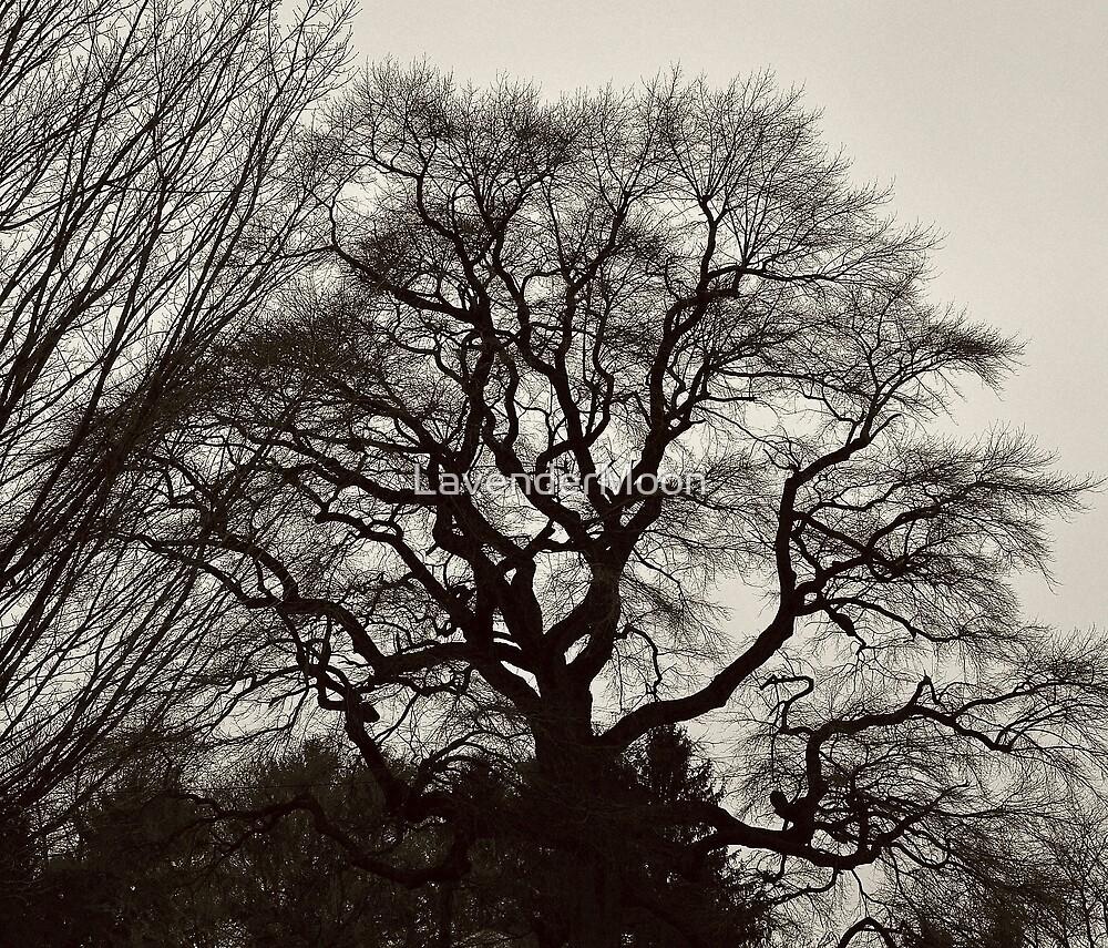 Grand Oak by LavenderMoon