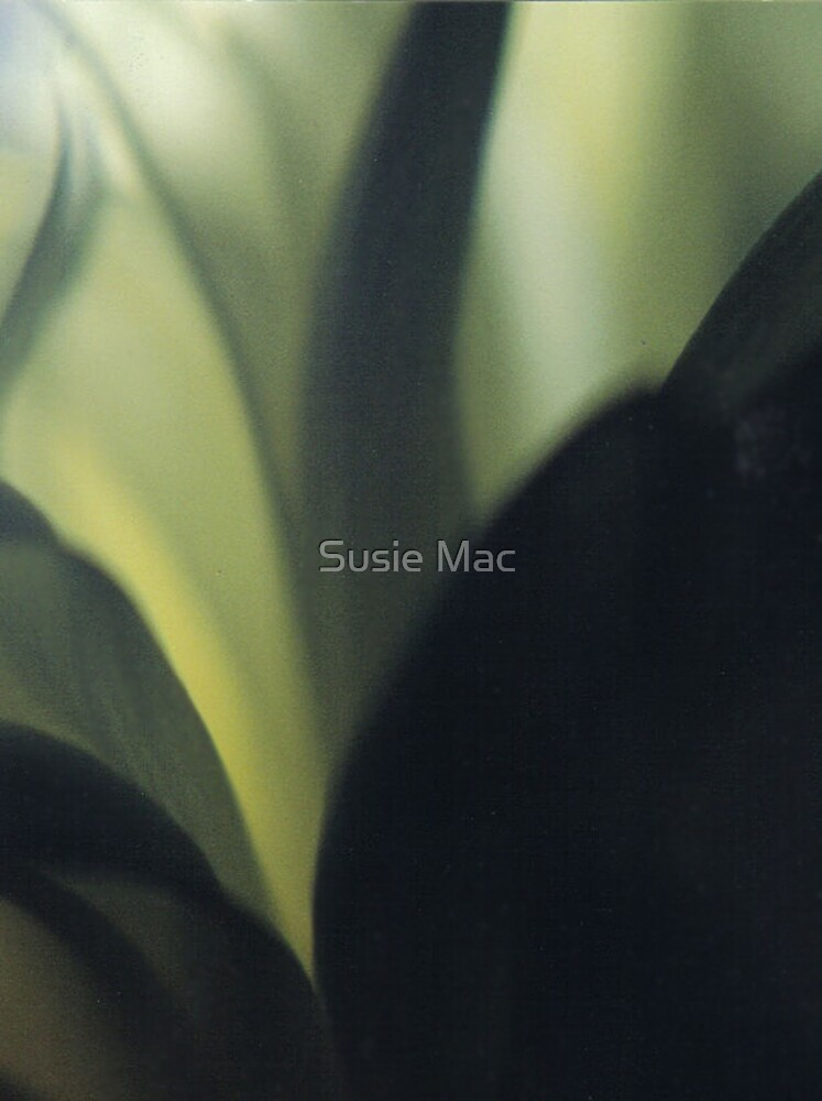Dark drapes 2 by Susie Mac
