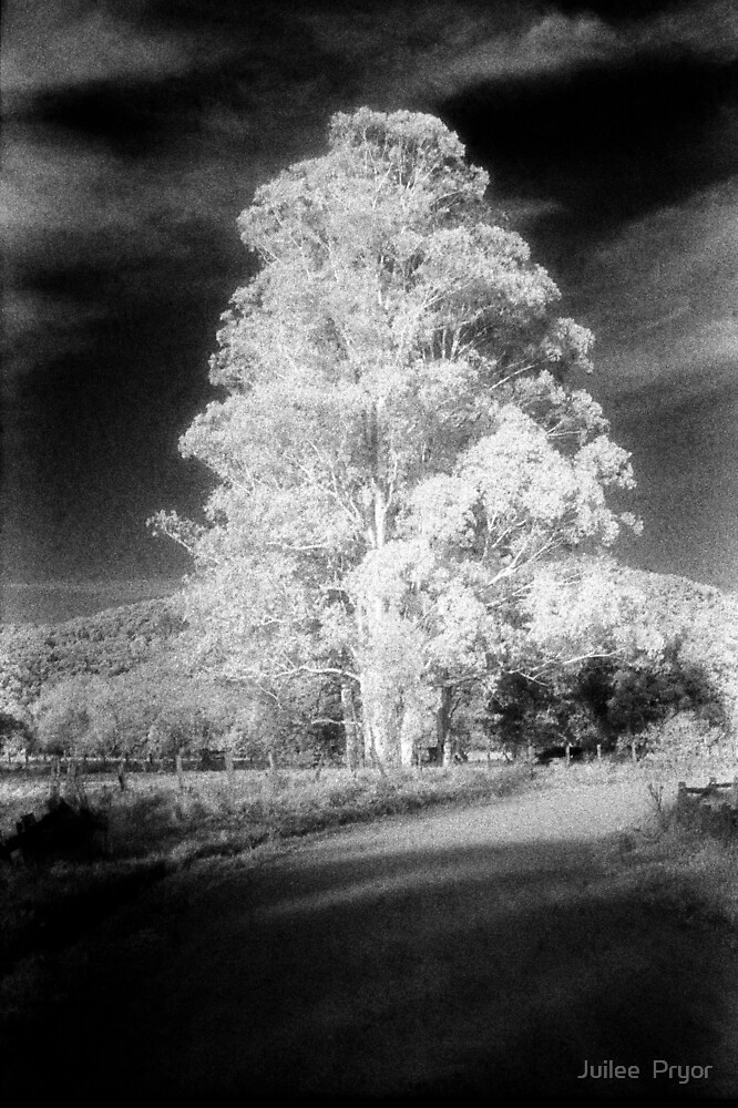 big tree little sky.......daniland by Juilee  Pryor