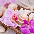 Pink Orchid and Maritime Objects Still Life by artsandsoul