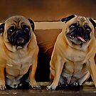 Meet Mr. Pug and his exhausted wife Mrs. Pug by © Kira Bodensted