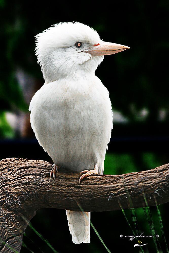 White or Albino Australian  Kookaburra by Maggiebee