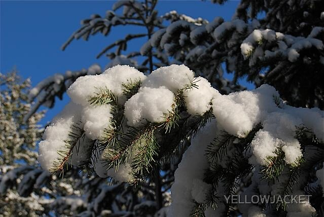 WINTER STILL WITH US by YELLOWJACKET
