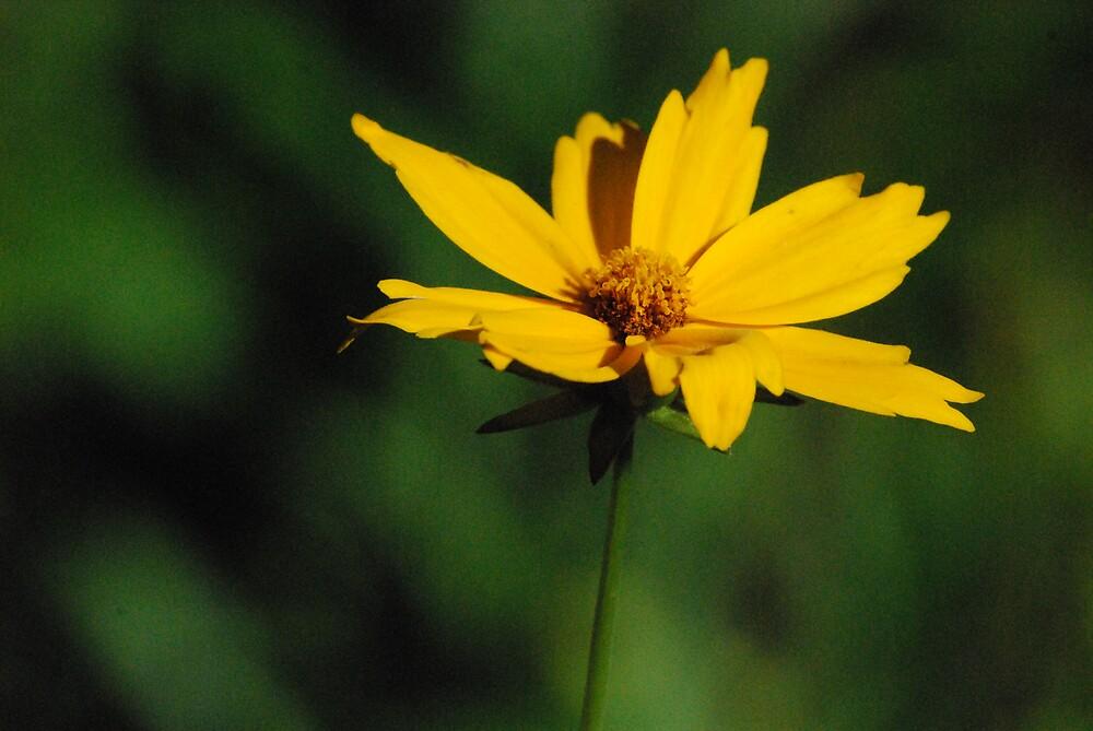mellow yellow by Princessbren2006