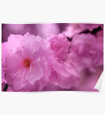 Flowering Almond bush pink 2 Poster