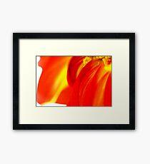 Macro Floral Framed Print