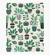 Potted Plants Photographic Print