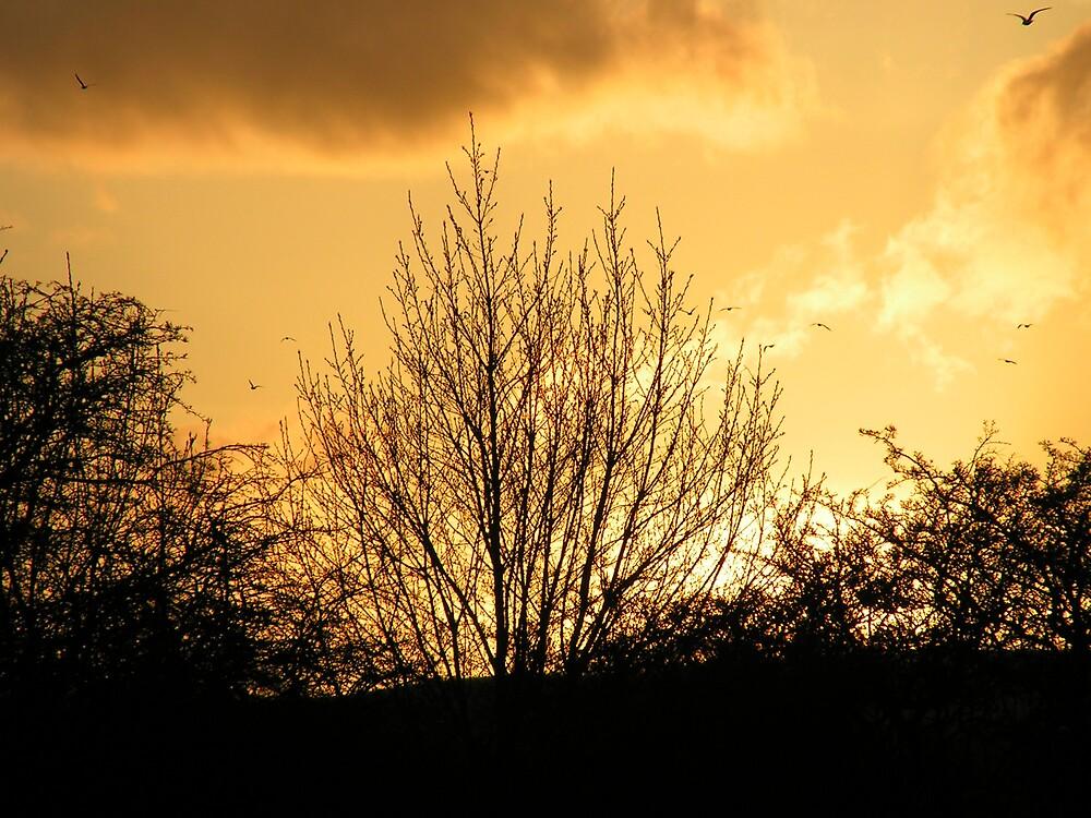 Golden Sunset by ralphdot
