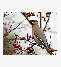 Magical Bohemian Waxwing Photographic Print