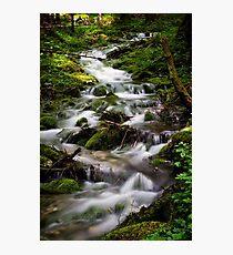 Forest Stream (Slovenia) Photographic Print