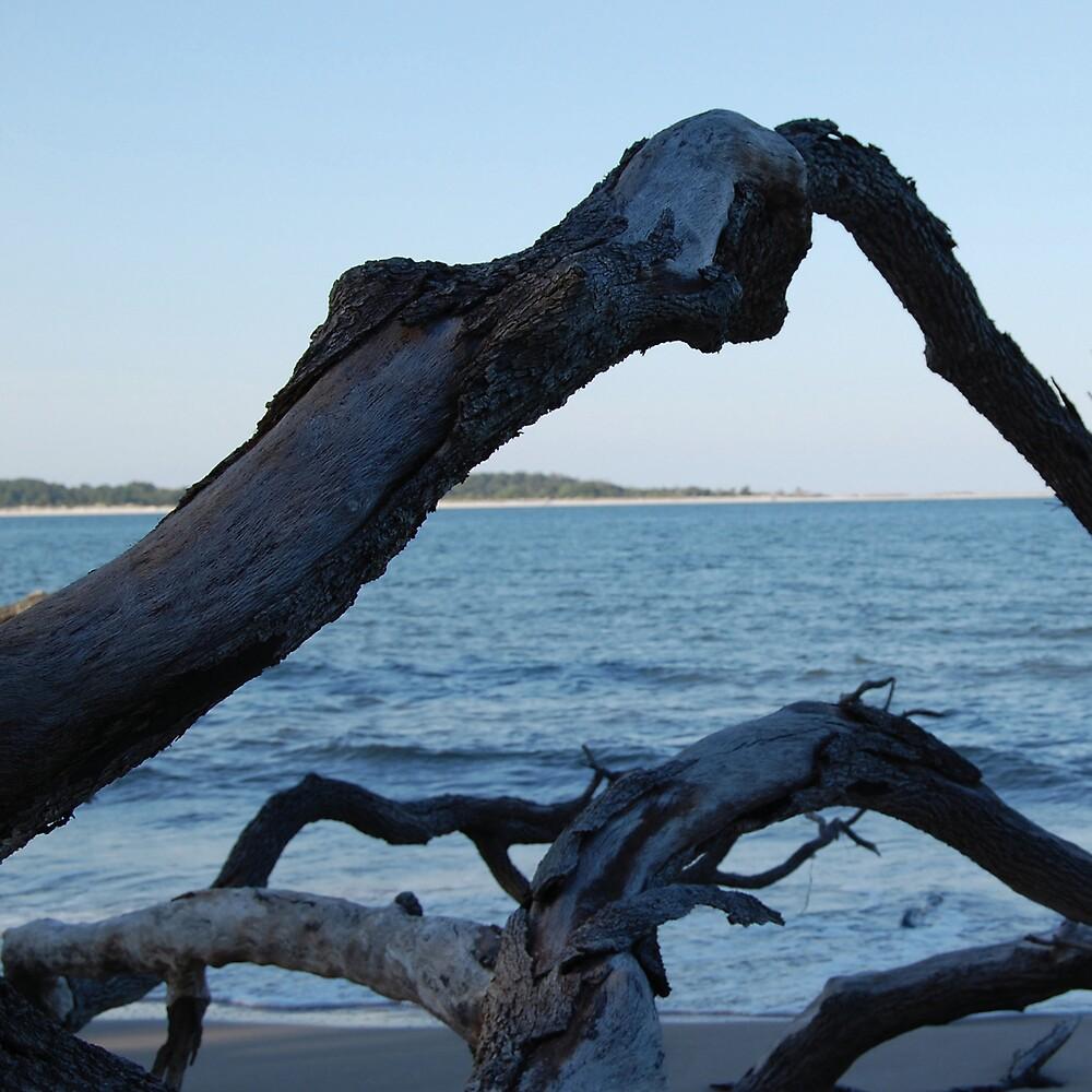 Big Talbot Island Driftwood by Emilie Pennington