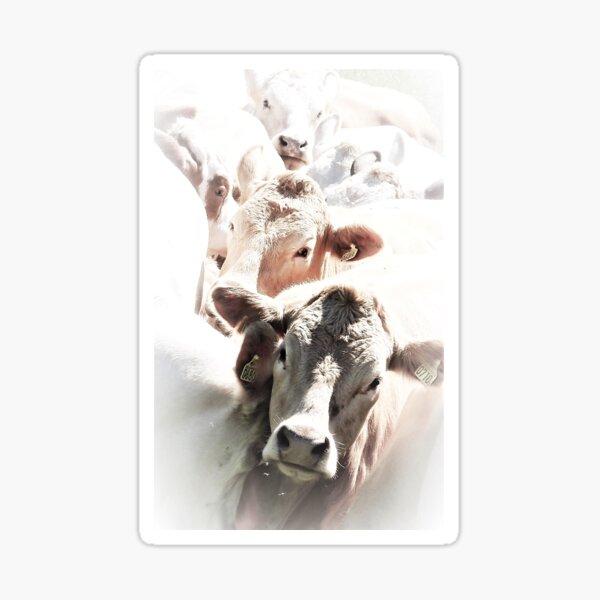 Cow parade Sticker