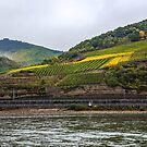 Vineyards along the way by Sherri Fink