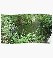 Nature Pond Scene Poster