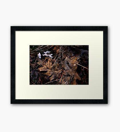 Forest Find Framed Print
