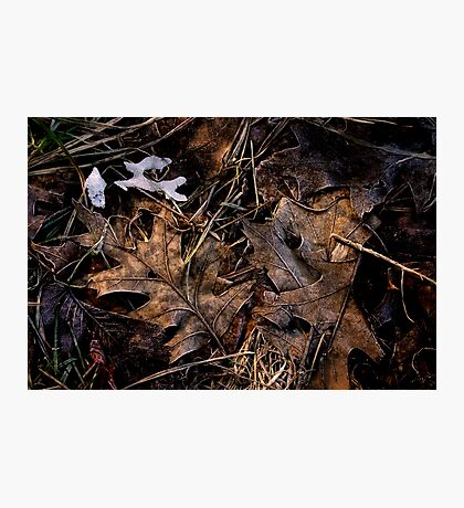 Forest Find Photographic Print