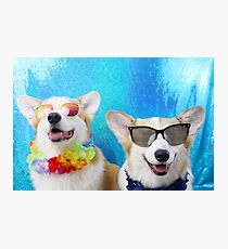 Summer Lovin' Corgis Photographic Print