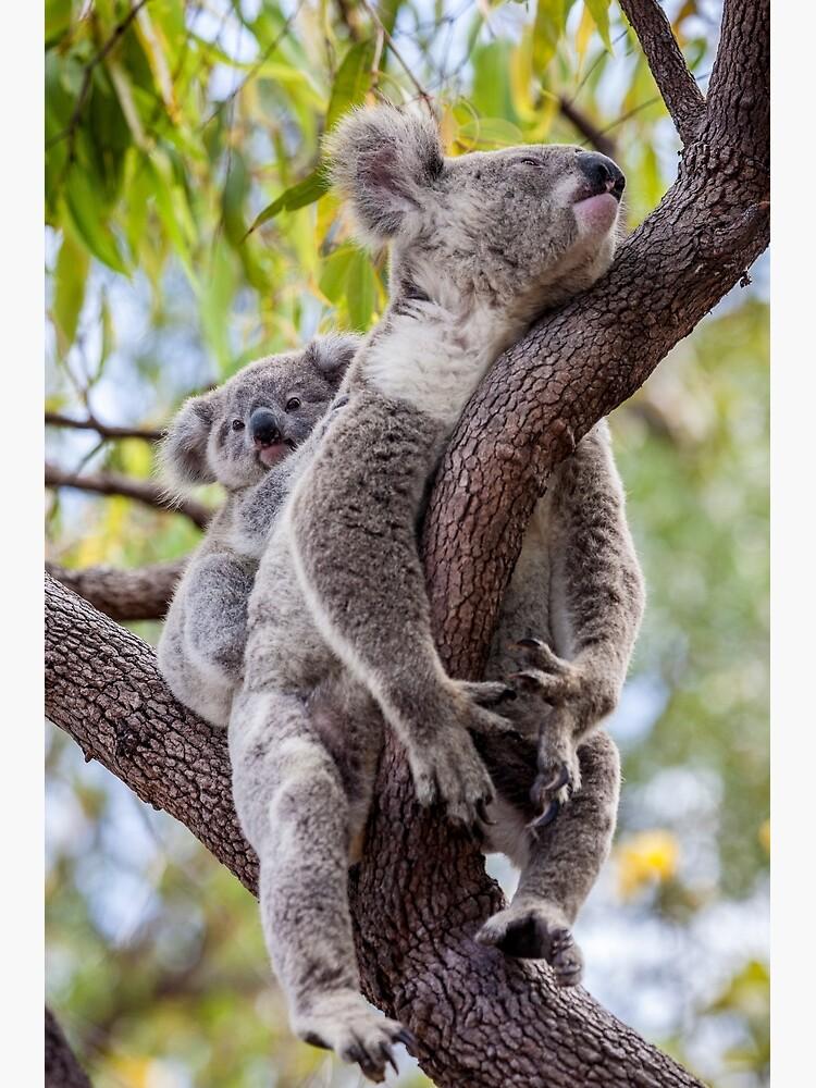 Mum's having a snooze by DavidWachenfeld