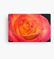 Two-tone Rose Metal Print