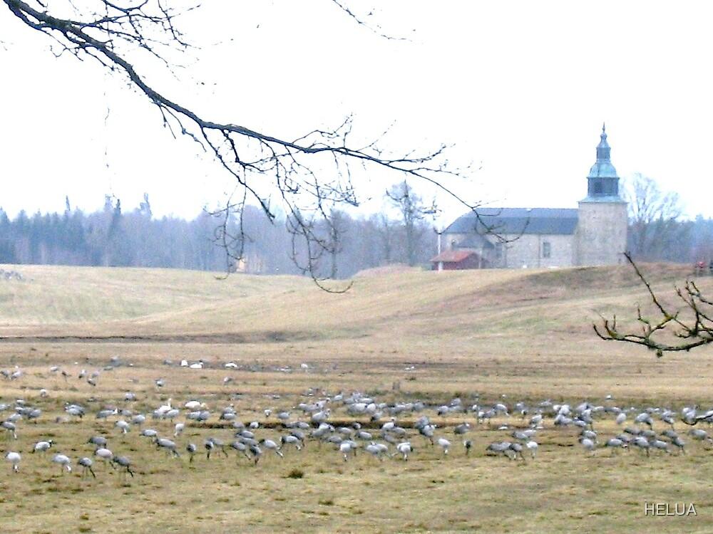 Cranes at Stora Bjurum by HELUA