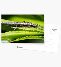 Mt Emu Stonefly Postcards