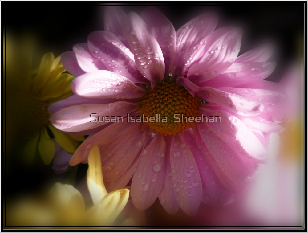 Dew Of The Faeries by Susan Isabella  Sheehan