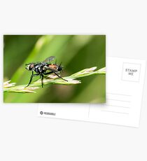 Fly Postcards