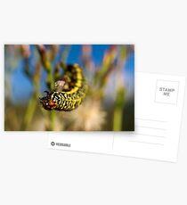 Hanging Postcards