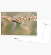Little Olive Postcards