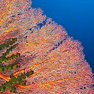 Colours of the reef by David Wachenfeld