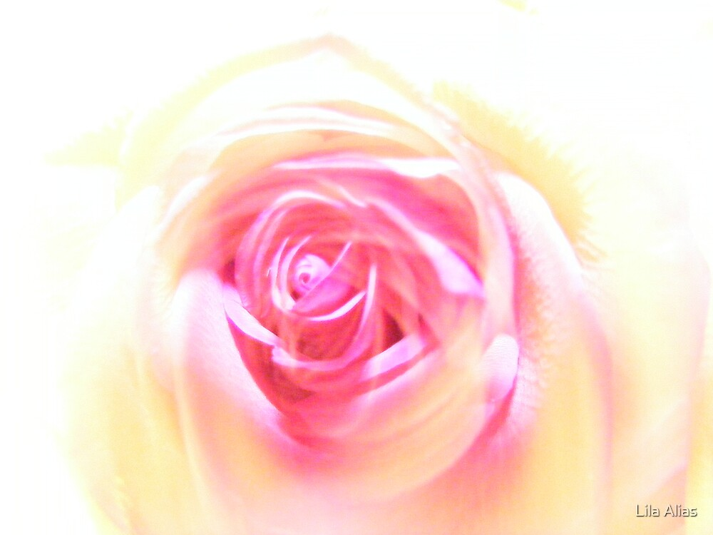 Abstract Rose by Lila Alias